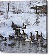 Winter Swimming Hole Acrylic Print