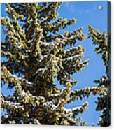 Winter Tale - Featured 3 Acrylic Print