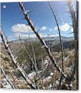 Winter Thorns Acrylic Print