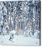 Winter Time In Forest Acrylic Print