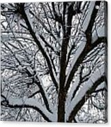 Winter Tree 1 Acrylic Print