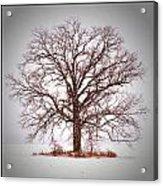 Winter Tree 8x10 Crop With White Bars Acrylic Print