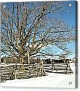 Winter Tree And Fence Acrylic Print