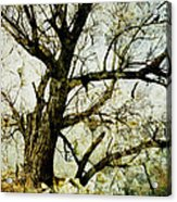 Winter Tree At The  Lake Shore  Acrylic Print by Ann Powell