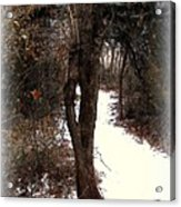 Tree With Ice Acrylic Print