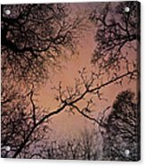 Winter Tree Canopy Acrylic Print