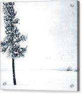 Winter Tree Acrylic Print