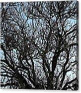 Winter Tree Hill End Nsw Acrylic Print by Ian  Ramsay