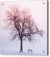 Winter Tree In Fog At Sunrise Acrylic Print by Elena Elisseeva