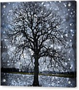 Winter Tree In Snowfall Acrylic Print