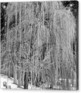 Winter Tree In Spokane - Black And White Acrylic Print