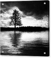 Winter Tree Light   Acrylic Print by Tim Gainey