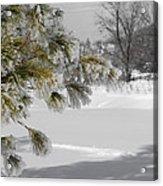 Winter Tree  Acrylic Print by Paulina Szajek