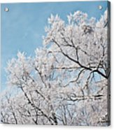 Winter Tree Scene Acrylic Print