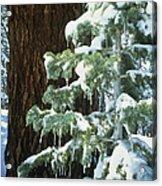 Winter Tree Sierra Nevada Mts Ca Usa Acrylic Print