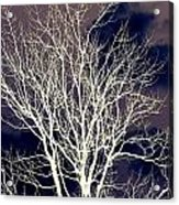 Winter Trees  2   Acrylic Print