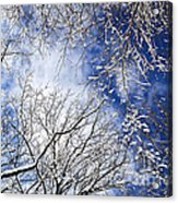 Winter Trees And Blue Sky Acrylic Print