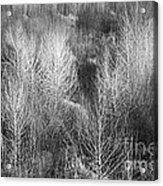 Winter Trees  B And W 1 Acrylic Print