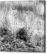 Winter Trees B And W 3 Acrylic Print