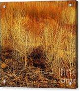 Winter Trees Color 3 Acrylic Print