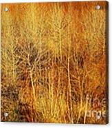 Winter Trees Color 4 Acrylic Print