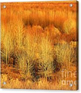 Winter Trees Color  7 Acrylic Print