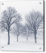 Winter Trees In Fog Acrylic Print by Elena Elisseeva