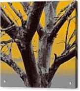 Winter Trees In Yellow Gray Mist 2 Acrylic Print