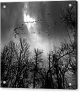 Winter Trees Moving Sky Acrylic Print