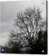 Winter Trees Number Four Acrylic Print