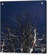 Winter Treetop Acrylic Print