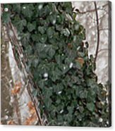 Winter Vine Acrylic Print