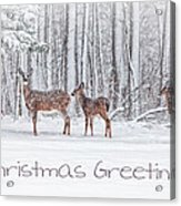 Winter Visits Card Acrylic Print