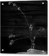 Winter Weeds In Bottle Black And White Acrylic Print