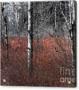 Winter Wetland I Acrylic Print