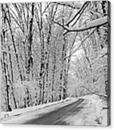 Winter White Acrylic Print