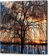 Winter Willow Acrylic Print