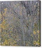 Winter Willows II Acrylic Print