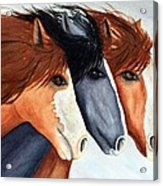Horse Trio Acrylic Print