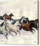 Winter Wishperer Acrylic Print