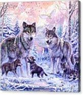 Winter Wolf Family  Acrylic Print