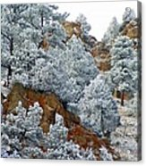 Winter Wonder Land Acrylic Print