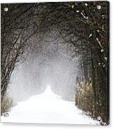 Winter Wonder Snow Tunnel Of Trees Acrylic Print