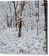 Winter Wonderland 2 Acrylic Print