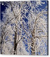 Winter Wonderland 7 Acrylic Print