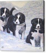 Winter Wonderland Acrylic Print by John Silver