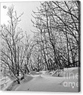 Winter Wonderland Monochrome Acrylic Print