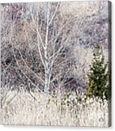 Winter Woodland With Subdued Colors Acrylic Print