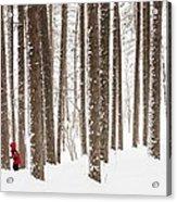 Winter Frolic Acrylic Print by Mary Amerman