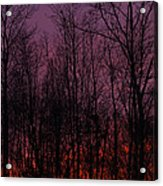 Winter Woods Sunset Acrylic Print